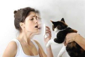 Аллергия на шерсть, как проявляется? Как лечить?