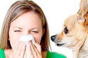 Аллергия на животных, у детей и у взрослых