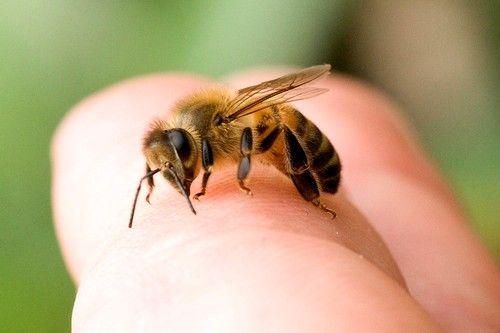 укусы различных насекомых могут спровоцировать аллергическую реакцию