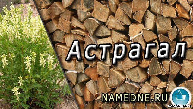 Astragalus - ljekovita svojstva