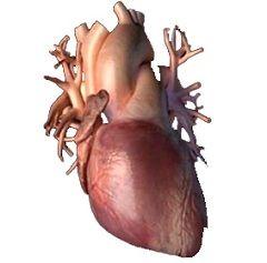Metode de tratare a hipertrofie a ventriculului drept