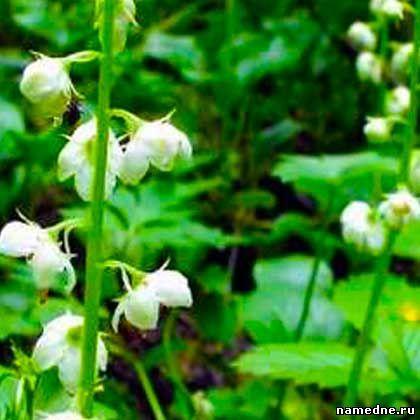 Ljekovita svojstva bilja i narodnih lijekova Liječenje