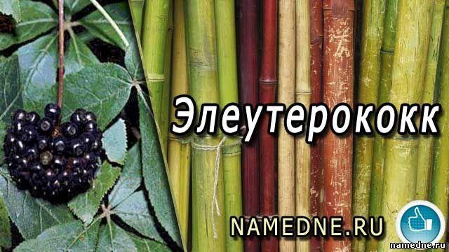 Eleutherococcus - ljekovita svojstva