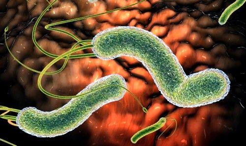 причина возникновения - вирусы или бактерии