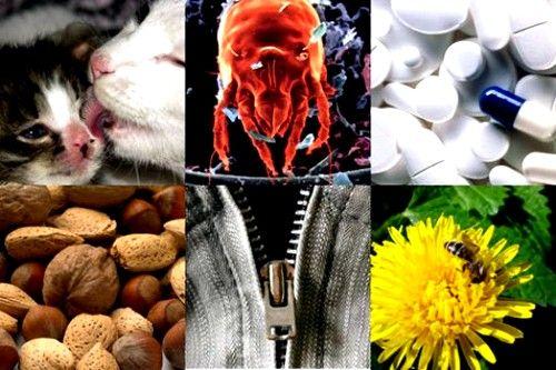 Аллергены как причина бронхита