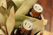 Масло эвкалипта: применение, свойства