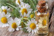 Масло ромашки для лица – применение, отзывы