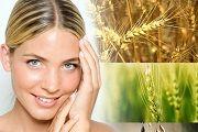 Масло зародышей пшеницы для лица, для волос, применение