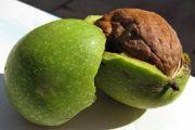 Настойка зеленого грецкого ореха: применение
