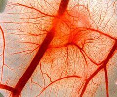 Нейроциркуляторная дистония симптомы