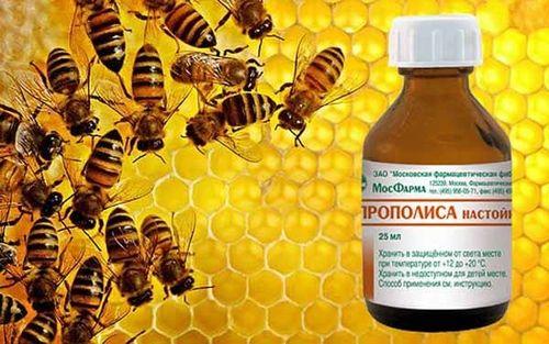 Propolis se priporoča za obnovo presnovo beljakovin in lipidov
