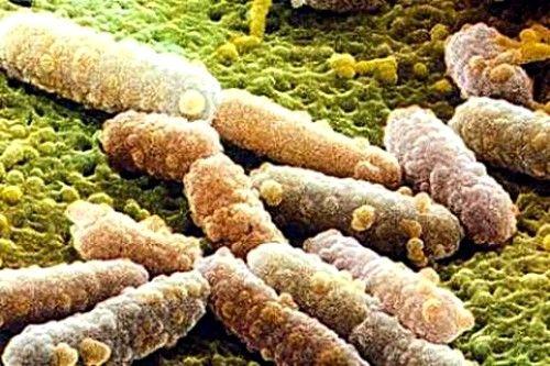 Увеличение во влагалище грибов рода candida провоцирует формирование кандидоза