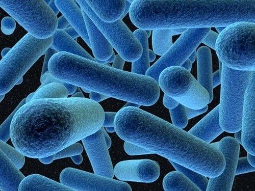 «Правильная» микрофлора препятствует попаданию и размножению во влагалище болезнетворных бактерий