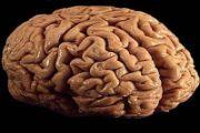 Rak golovnogo mozga – prichinyi diagnostika prognoz