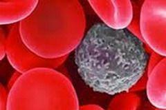 Рак крови — бесконтрольное деление и мутация кроветворных клеток, клеток костного мозга и клеток лимфатической системы