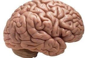 risk zavisit ot mozga