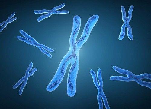К этиологическим факторам развития хромосомной аномалии следует отнести присутствие лишней 18-й хромосомы