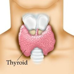 Un grup de boli ale glandei tiroide - tiroidita