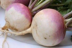 Турнепс (семена турнепса) - описание, целебные свойства, применение