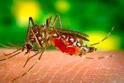 Un vaccin impotriva malariei