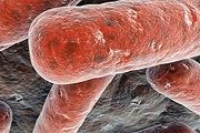vnelegochnui tuberkulez