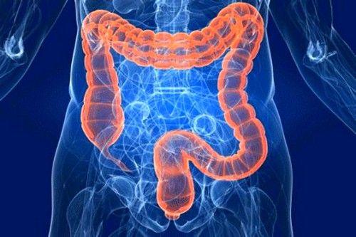 bolesti crijeva